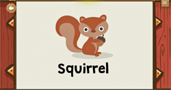 Guess the animal squirrel